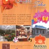 Ad Graphic Design Hawaii & Brochure Printing Hawaii- Akatsuka Orchids